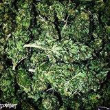 Dopefight 'Buds' CD 2010