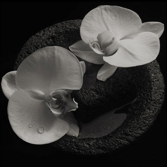 Jean-Claude Vannier & Mike Patton 'Corpse Flower'