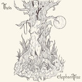 Elephant Tree 'Theia'