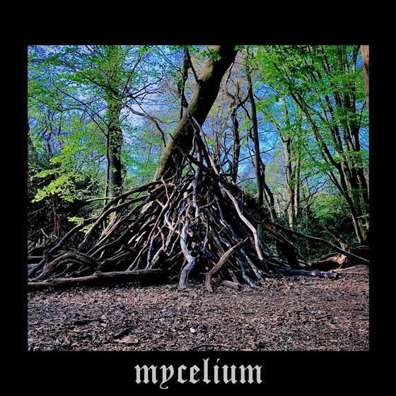 Mycelium 'A Multiplicity Of Hidden Worlds'