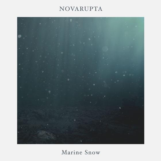 Novarupta 'Marine Snow'