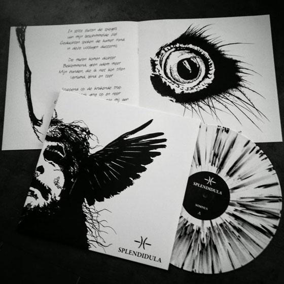 Splendidula 'Somnus' vinyl
